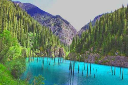 underwater-forest-of-lake-kaindy-copy