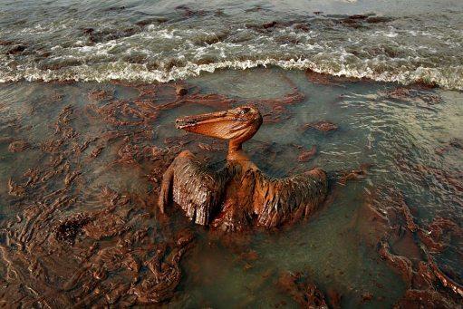 la-oil-spill-50